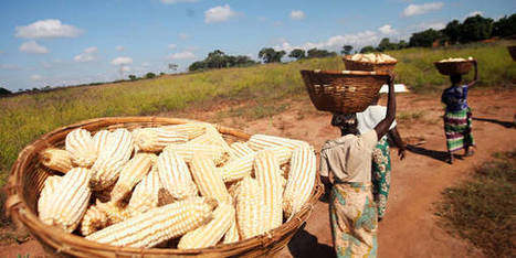 Monitoring African Food and Agricultural Policies | Plant Breeding and Genomics News | Scoop.it