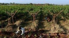 Moët Hennessy (LVMH) initient les Indiens aux vins pétillants - France 3   VINS ET SPIRITUEUX   Scoop.it