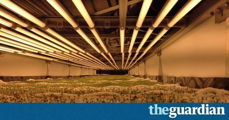 World's largest vertical farm grows without soil, sunlight or water in Newark | Societal Resilience, Foodproduction, Mobility, Living, Logistics, Infrastructure | Scoop.it