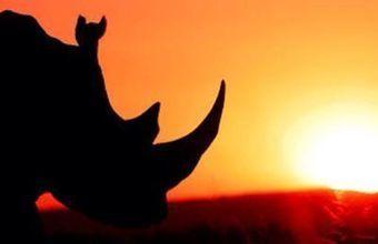 Three Rhino Poachers Shot Dead in Kruger... - PurpleWolf White | Facebook | Kruger & African Wildlife | Scoop.it