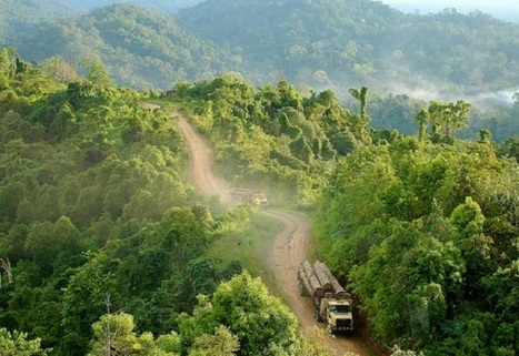 Forests can soak up a third of carbon emissions | Alex Kirby |  Climate News Network | Développement durable et efficacité énergétique | Scoop.it