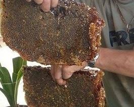 Apiculture Occitane | Apis apiculture - des formations en apiculture et des infos apiculturelles | Scoop.it