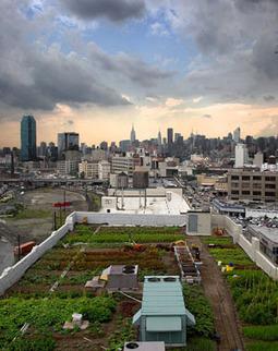 Farm theRooftops | Wellington Aquaponics | Scoop.it