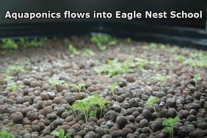 Sangre Chronicle > Archives > News > Aquaponics project flows into Eagle Nest School | Vertical Farm - Food Factory | Scoop.it