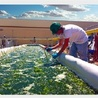 Plant valorization