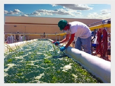 Farmed algae - potential to be major sustainable source for the industry   Plant valorization   Scoop.it