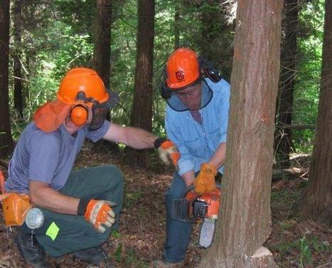 Forêts   Interprofession Forêt Bois des Pyrénées-Atlantiques   Scoop.it
