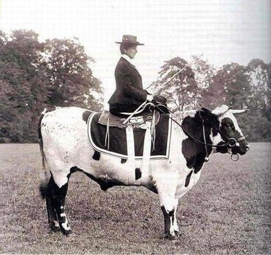 Sidesaddle with a twist!   Equine Photography   Scoop.it