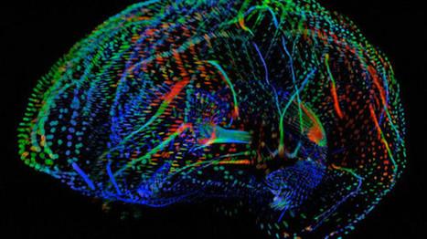 Mappare il cervello umano - NewsAbruzzo | Neuroscienze | Scoop.it