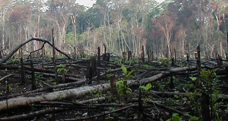 Incroyable : En Inde, 50 millions d'arbres ont été planté en une seule journée   Wallgreen - Louez moins cher et passez au vert !   Scoop.it