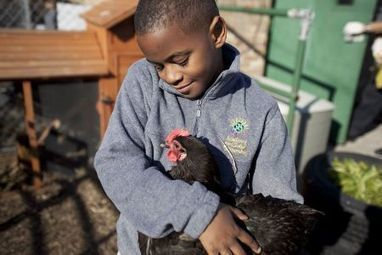 Solar Panels and Schoolyard Chickens: A Net-Positive Campus | Sizzlin' News | Scoop.it