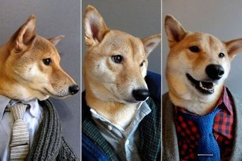 My Car News: Fashion Beast: Introducing Menswear Dog; A New Clue in Missoni Mystery | amazing and funny | Scoop.it