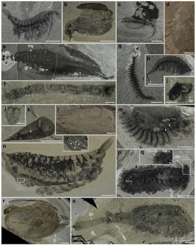 Canada's New Cambrian Explosion: Burgess Shale Chapter Two - Answers in Genesis | Newsworthy Notes - Apologetics | Scoop.it