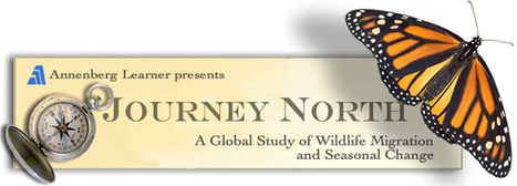 Journey North Citizen Science: A Global Study of Wildlife Migration and Seasonal Change | Monarchs | Scoop.it