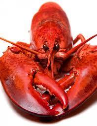 Delicious Foods Recipe: A Family Dinner Turned Special with Lobster | FOOD TECHNOLOGY  NEWS | Scoop.it
