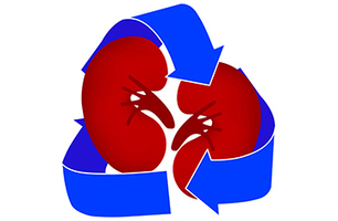 Living donor transplantation: Should we advocate for it? - NephrologyNews.com   living organ donor   Scoop.it
