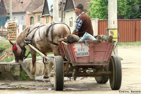 Viande de cheval : un hallucinant circuit en Roumanie! | Gourka | Scoop.it