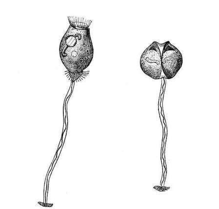 The Project Gutenberg eBook of Marvels Of Pond-life, by Henry J. Slack.   soil mesocosm   Scoop.it