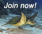 Together We Can Protect Our Oceans | Marine Biology | Scoop.it