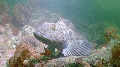 Marine society blasts lack of enforcement, launches campaign to protect Howe Sound marine life | Marine Protection | Scoop.it