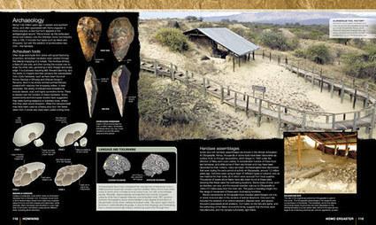 L'histoire de l'homme - Hominidés   Histoire et Archéologie   Scoop.it