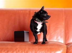 Away from home? Petcube lets you watch and play with your pets online - NBC News.com | Pet News | Scoop.it