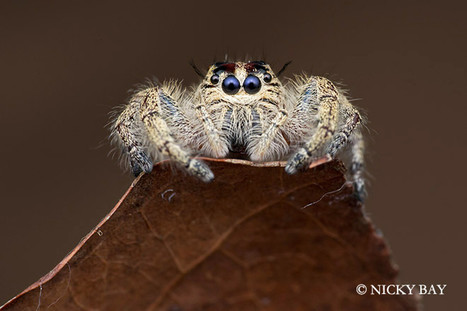 Des araignées comme vous n'en avez jamais vu | Rescoop -Faune - Flore - Environnement | Scoop.it