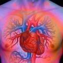 L' ansia uccide: se si soffre di malattie cardiache il rischio di morte raddoppia | Psicologia a 360° | Scoop.it