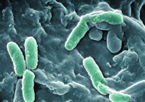 Space Bacteria Grow In Weird Ways, Scientists Find | Science, History, Weird or Funny Facts | Scoop.it