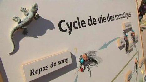 Fête de la nature : les enfants sensibilisés au moustique-tigre - France 3 Corse ViaStella | Variétés entomologiques | Scoop.it