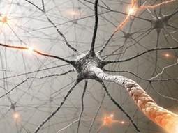 Neurônios são renovados regularmente no cérebro ao longo da vida, diz estudo - Revista Época   Coaching & People Empowerment   Scoop.it
