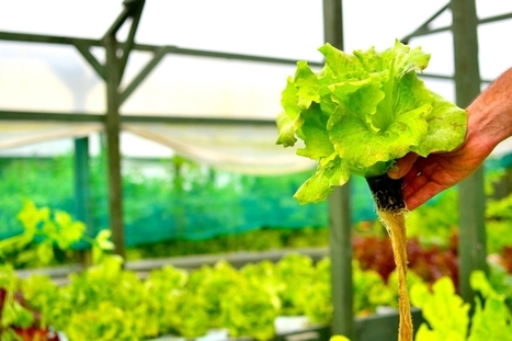 UK - This Chef Quit His Restaurant Job to Start a Sustainable, Aquaponics Trout Farm   Aquaponics in Action   Scoop.it