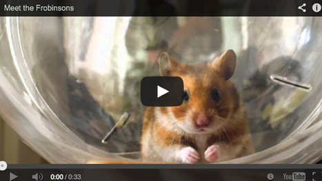 When Sprint's Chairman Threatens to Fire its Agencies Hamsters Step in - Chief Marketer | Digital-News on Scoop.it today | Scoop.it