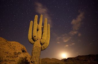TimeScapes: Death is the Road to Awe | The Lophophora Blog | Scoop.it