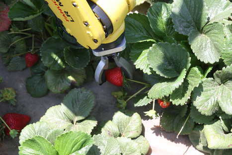 Future of farming geared for efficient robotic workers | Design News, by Cabe Atwell | Cultibotics | Scoop.it