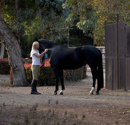 Shoo, Fly! – America's Horse Daily | Horse Sense | Scoop.it