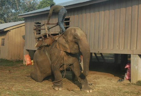 Urge These Travel Companies to Stop Promoting Cruel Elephant Rides TODAY | Nature Animals humankind | Scoop.it
