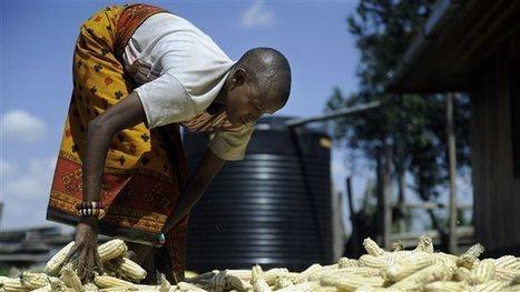 La production agricole menacée par le réchauffement climatique   Agriculture et Développement   Scoop.it