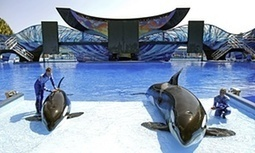 SeaWorld sees profits plunge 84% as customers desert controversial park | Economic impact of tourism | Scoop.it