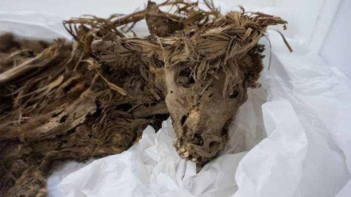 1,000-year-old dog sacrifice burial site found in Peru | Archaeology News Network | Kiosque du monde : Amériques | Scoop.it
