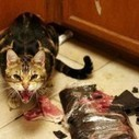 Why You So Angry, Little Cat? | Cat Care And Fun | Scoop.it
