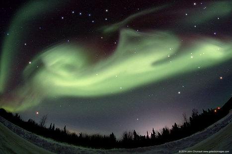 Chien polaire sur l'Alaska | Hurtigruten Arctique Antarctique | Scoop.it