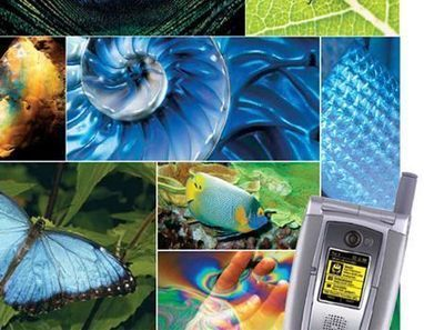 Design Tips from Mother Nature | Biomimicry | Scoop.it