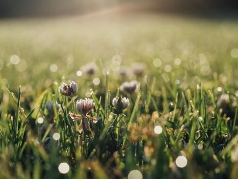 Des plantes pour dépolluer les sols  | Biodiversité & Relations Homme - Nature - Environnement : Un Scoop.it du Muséum de Toulouse | Scoop.it