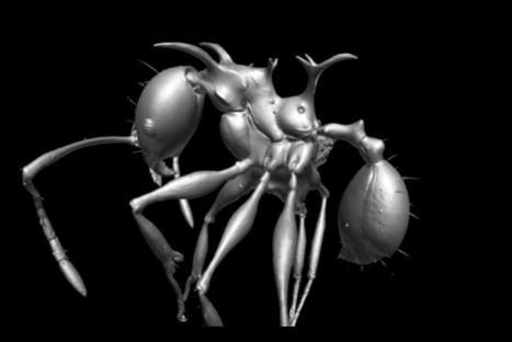 Vidéo 3-D sur la nouvelle espèce de fourmi nommée d'après les dragons de Game of Thrones | EntomoNews | Scoop.it