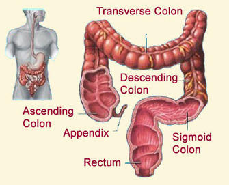Natural Colon Cleanse. Bowel Cleansing To Flush Toxic Build-Up | Natural Health and Wellness | Scoop.it