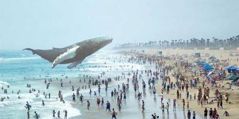 Magic Leap, la mystérieuse start-up de réalité augmentée qui intéresse Google | éducation_nouvelles technologies_généralités | Scoop.it