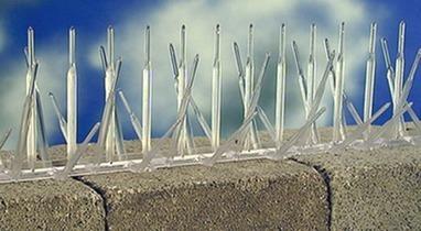 Bird Spikes for Home Use - Bird Deterrents | Bird-B-Gone, Inc | Knitting Patterns | Scoop.it