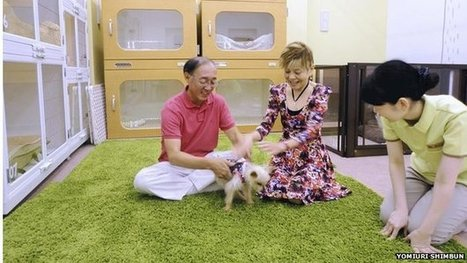 Japan: The rising popularity of old dog care centres - BBC News | Chic4Dog Care | Scoop.it
