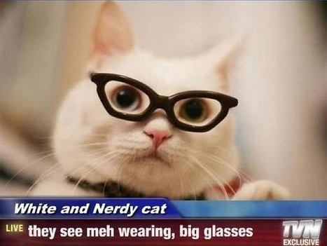 10 Cute Cats Wearing Hipster Glasses | Ça alors ! | Scoop.it